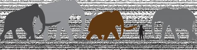 Mammoth_sizes_trans-1024x262