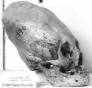 skull_cone2